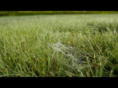 """""""The Social Lives of Grass"""", Dr Jeremy Mayall and Sebastian J Lowe"""